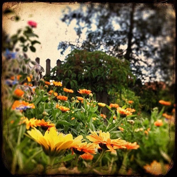 Summer Photograph - Flowerpower Field by Urs Steiner