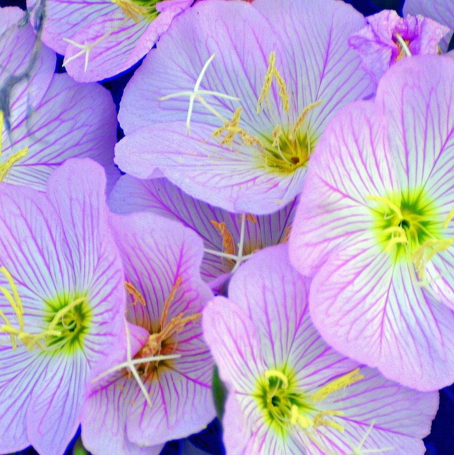 Wildflowers In Arkansas Photograph - Flowers Flowers by Marty Koch
