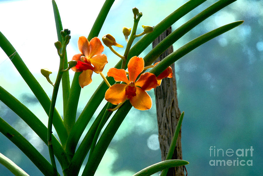Nature Photograph - Flowers In Spring by Pravine Chester