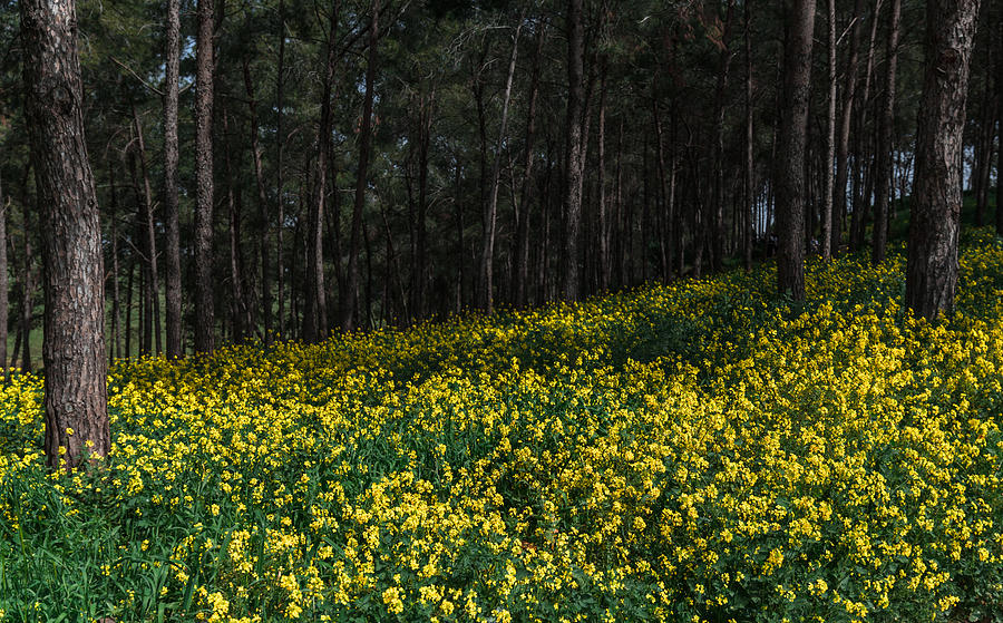 Background Photograph - Flowers in the forest by Michael Goyberg