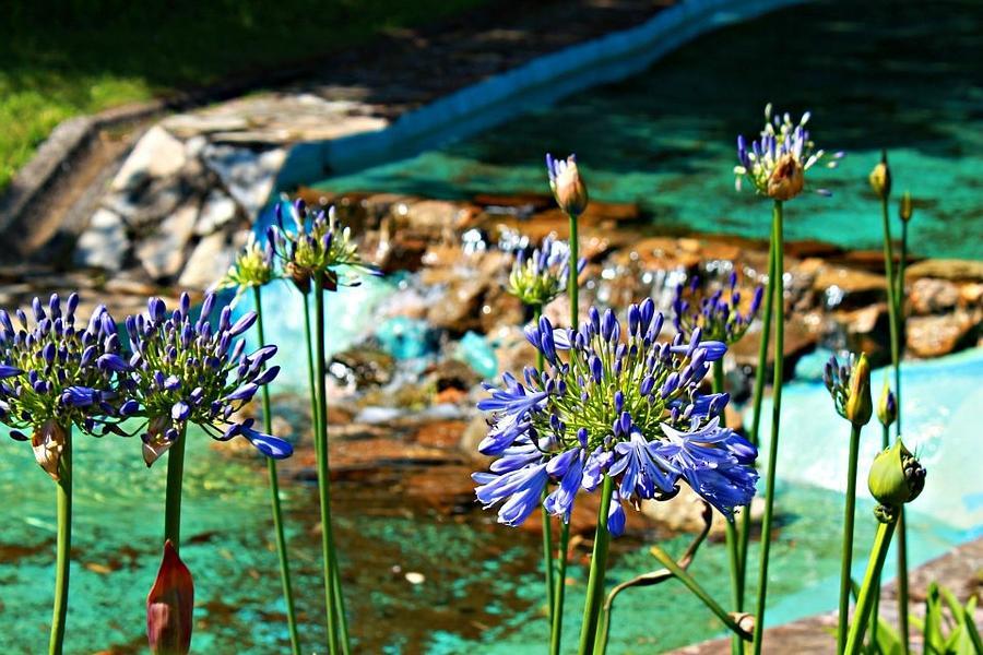 Flowers Photograph - Flowers by Jenny Senra Pampin