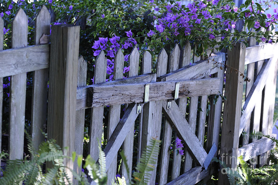 Fence Photograph - Flowers On A Fence by Nancy Greenland