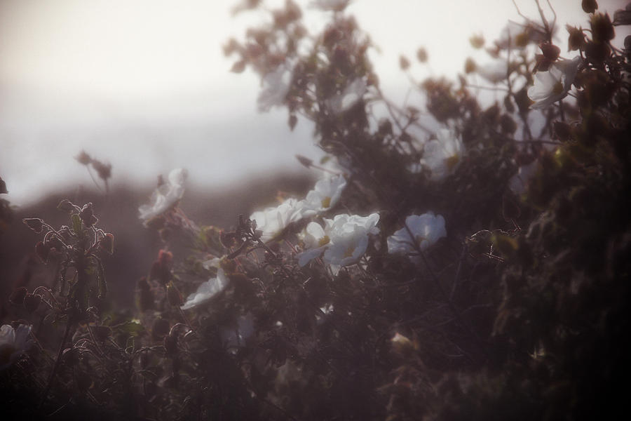 Flowers Peaceful Tranquil Hazy Moody Photograph - Flowers by W B Black