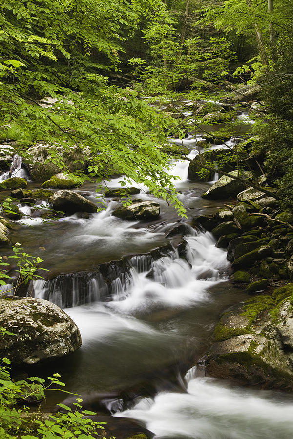 Tremont Photograph - Flowing Mountain Stream by Andrew Soundarajan