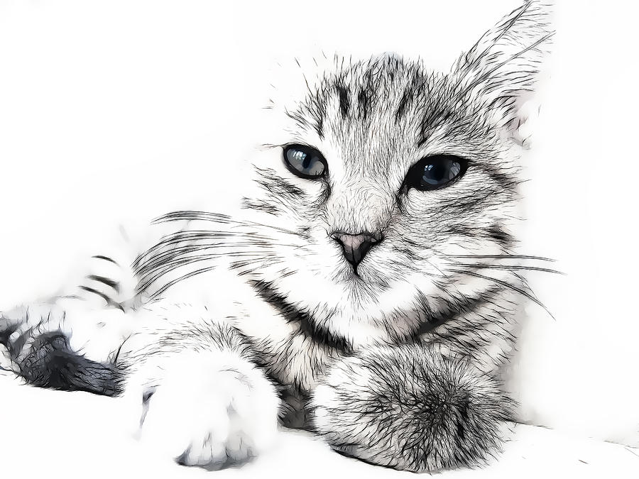 Cat Photograph - Fluff by Tilly Williams