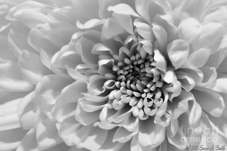 Flutter Photograph