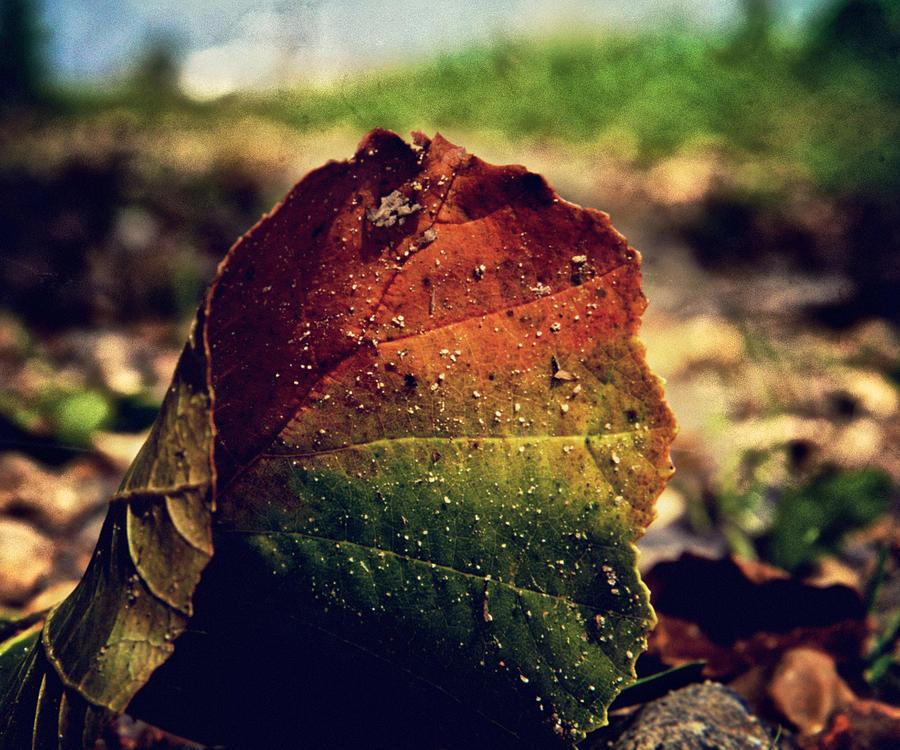 Leaf Photograph - Flux by Odd Jeppesen