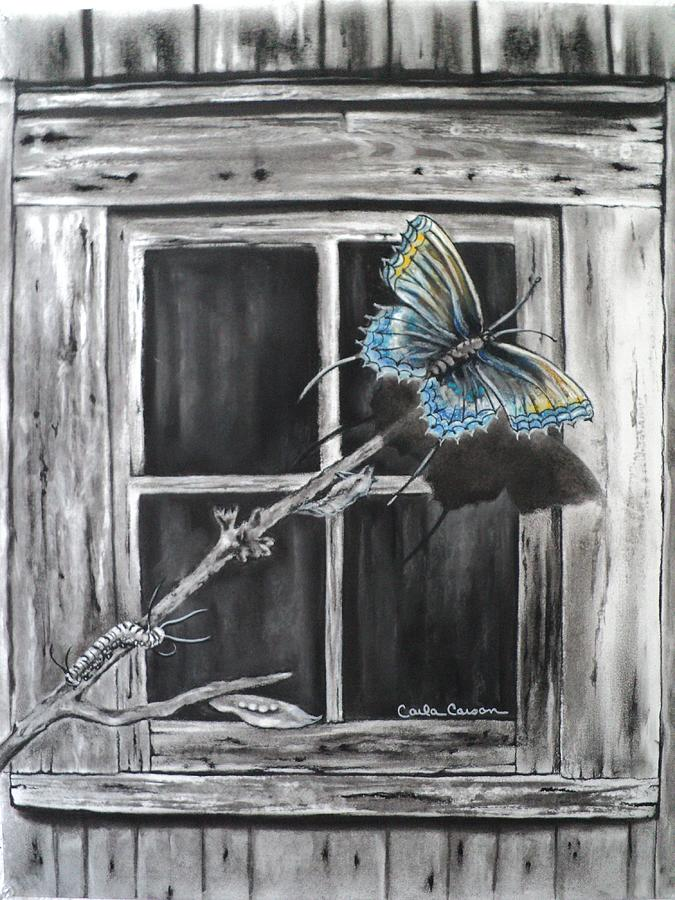 Butterfly Drawing - Fly Away Free by Carla Carson