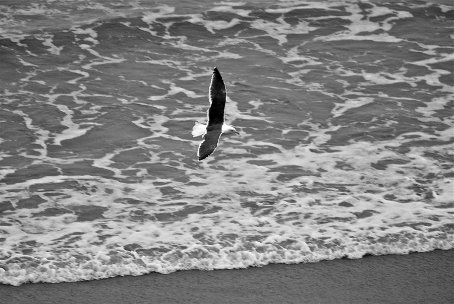 Seagull Photograph - Fly By by Eric Tressler