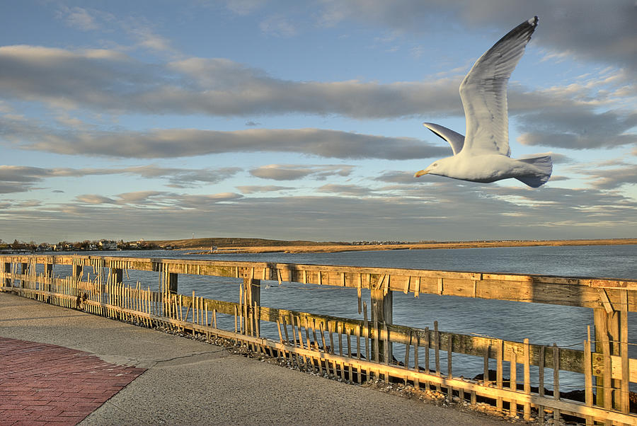 Flying Photograph - Fly Bye by David Clark