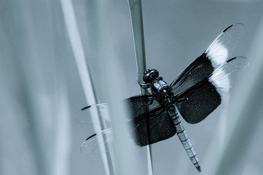 Dragon Fly Photograph - Fly Dragon by Darren Cole Butcher
