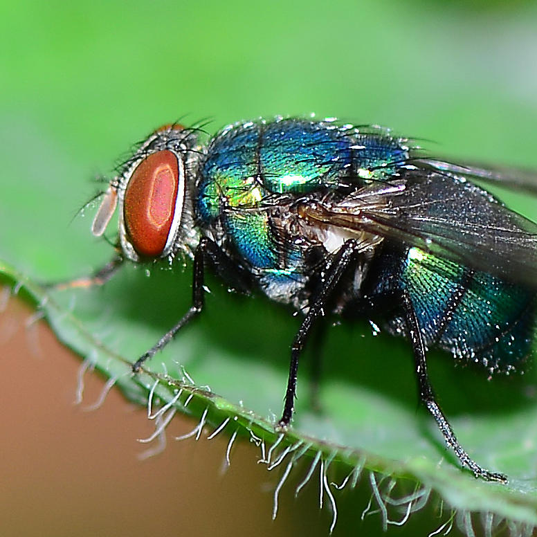 Colorful Photograph - Fly by Michelle Armstrong