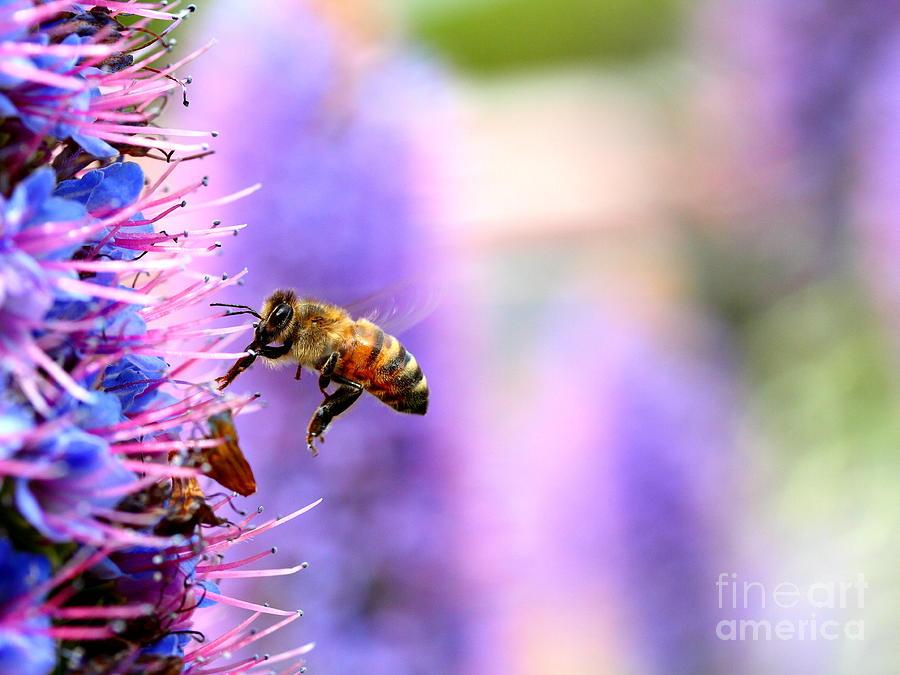 Bee On Purple Flower Stock Image Image