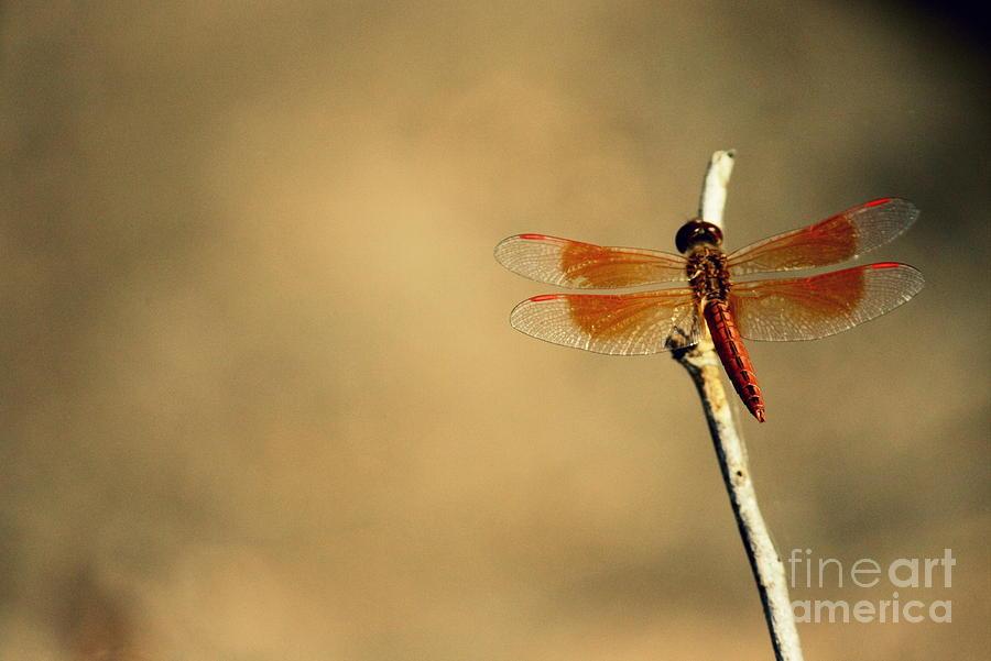 Wasp Photograph - Flying Colours by Vishakha Bhagat