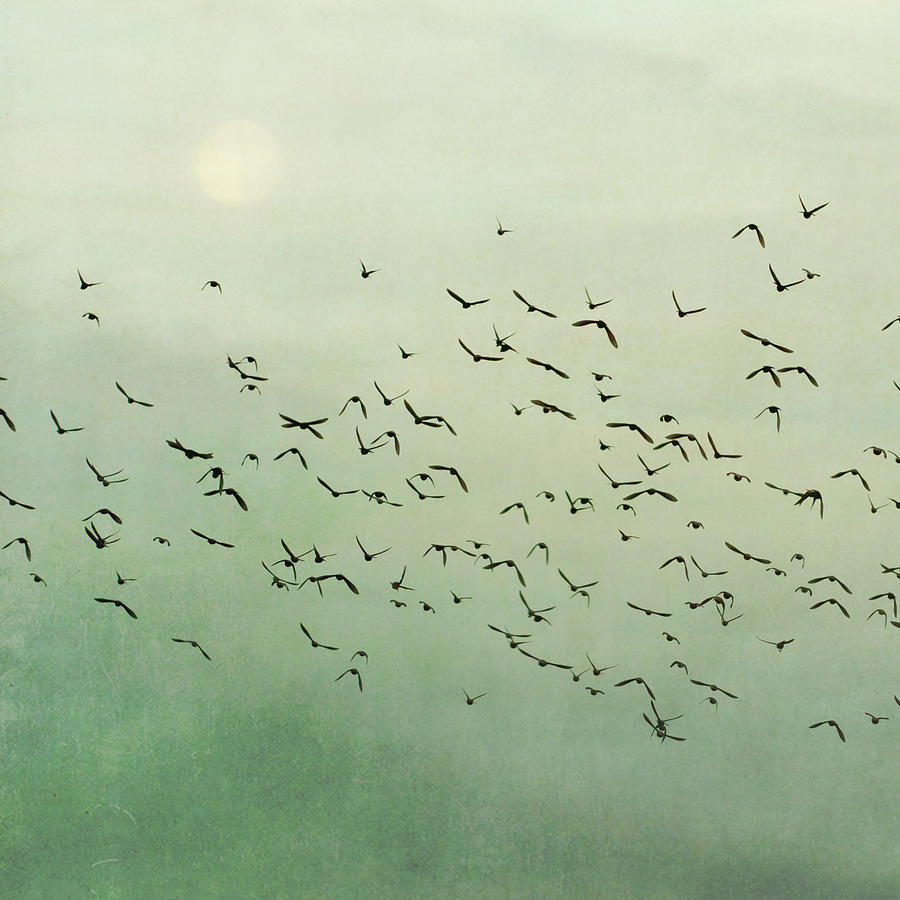 Square Photograph - Flying Flock Of Birds by Laura Ruth