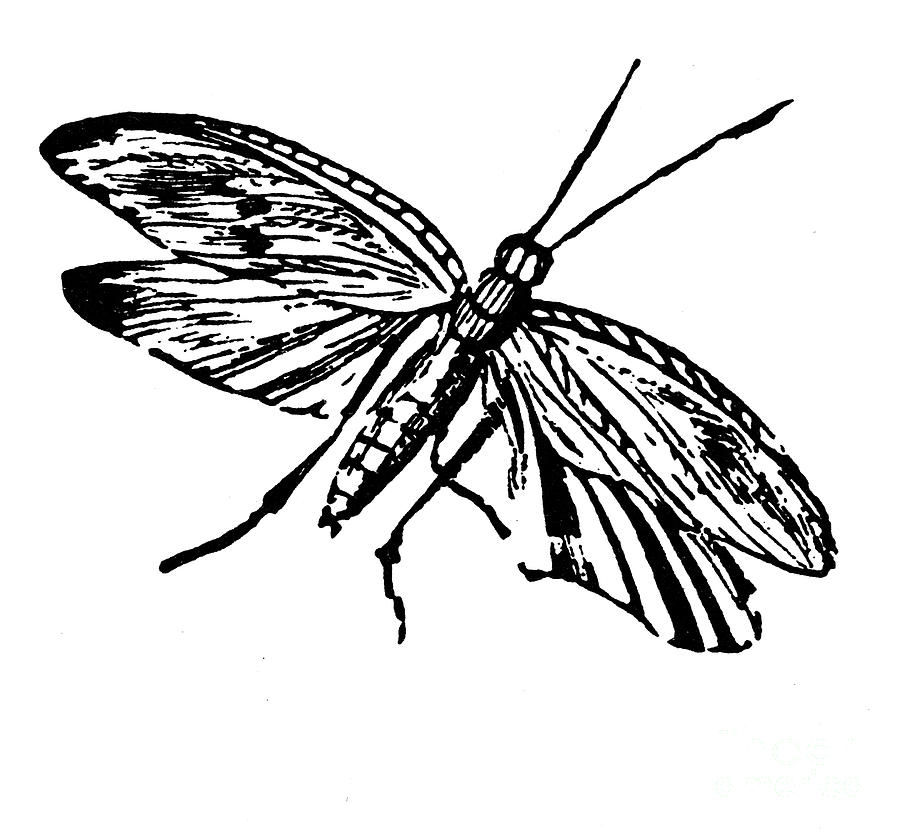 19th Century Photograph - Flying Insect by Granger