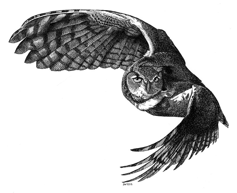 great horned owl drawing flying owl by scott woyak