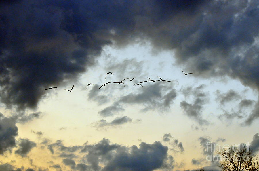 Birds Photograph - Flying South For The Winter by Paul Ward