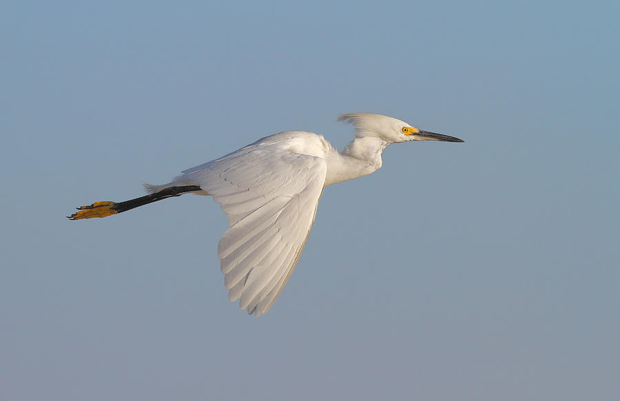 Bird Pyrography - Flying With An Attitude... by Salah Baazizi