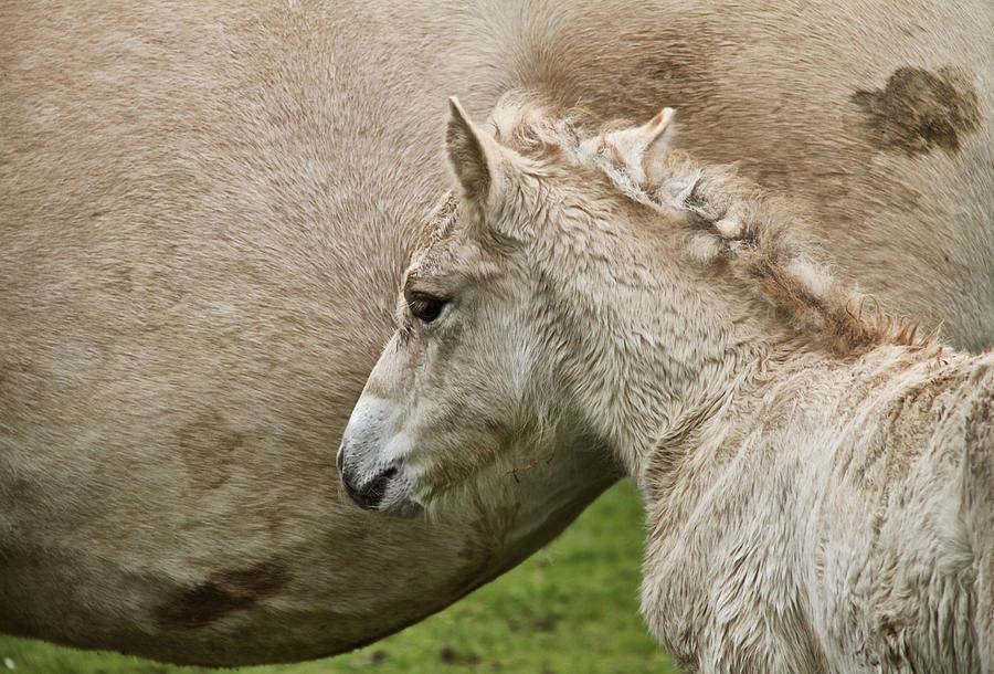 Foal Photograph - Foal by Odd Jeppesen