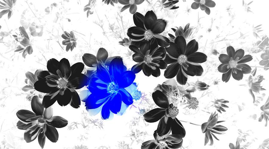 Blue Photograph - Focal Black And White Beauty by Kim Galluzzo Wozniak