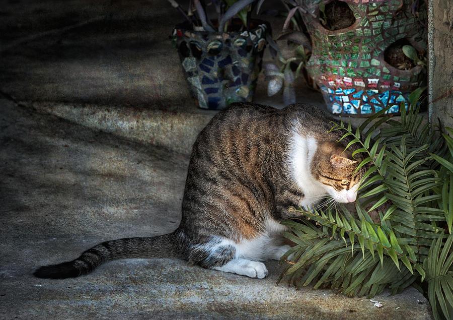 Cat Photograph - Focus by Brenda Bryant