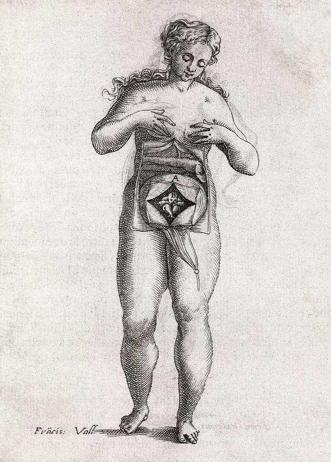 Human Photograph - Foetus In Uterus, 17th Century Artwork by Middle Temple Library