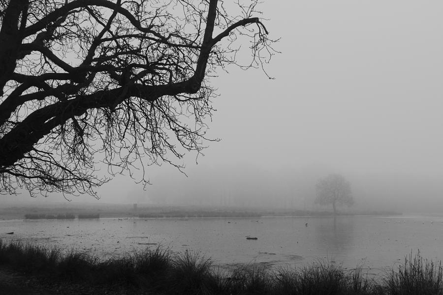 Fog In The Park Photograph