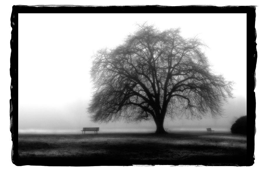Art Pyrography - Foggy Day H-4 by Mauro Celotti