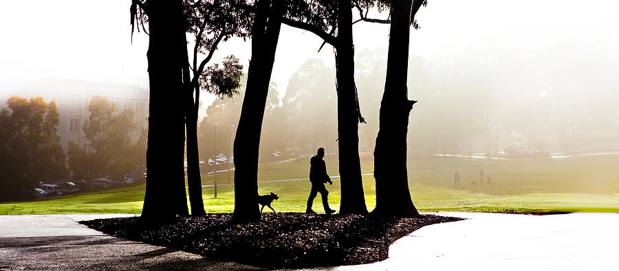 Walking The Dog Photograph - Foggy Day To Walk The Dog by Harry Neelam