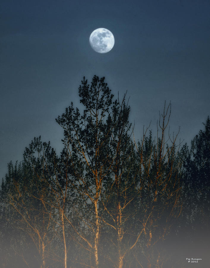 Full Moon Photograph - Foggy Forest With Full Moon by Peg Runyan