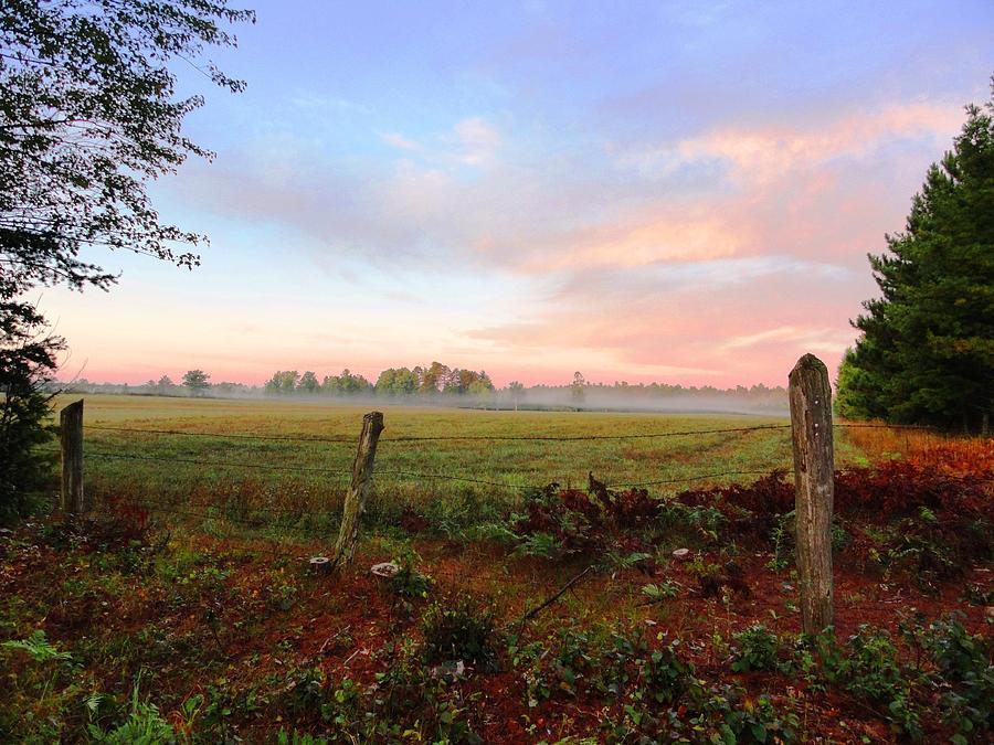 Fog Photograph - Foggy Morning Field by Sue Duda