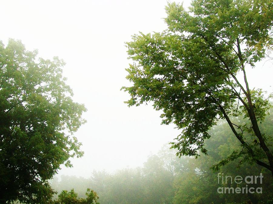 Photo Photograph - Foggy Morning by Marsha Heiken
