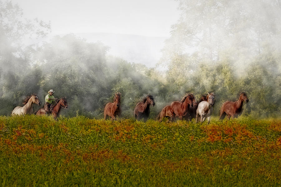 Equestrian Photograph - Foggy Morning by Susan Candelario