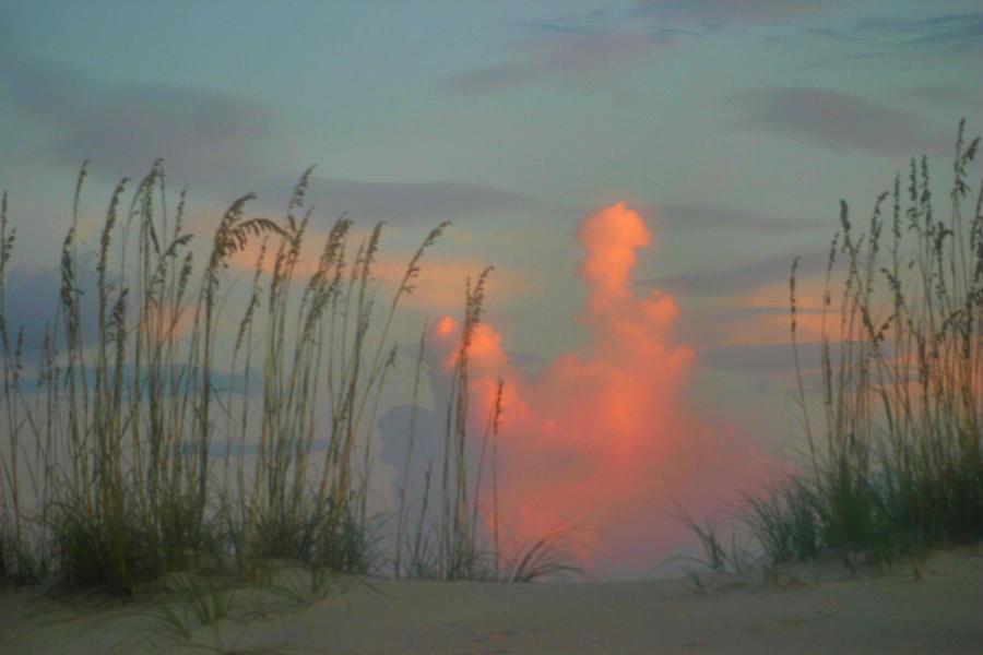 Sea Oats Photograph - Foggy Oats by Kristin Elmquist