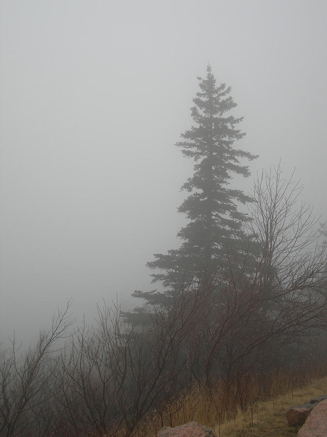 Maine Photograph - Foggy Sentinel by Skip Willits