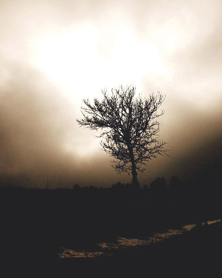 Landscape Photography Photograph - Foggy Winter Morning by Ann Powell