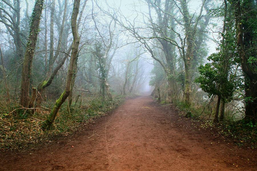 Fog Photograph - Foggy Woodland Trail by Julie L Hoddinott
