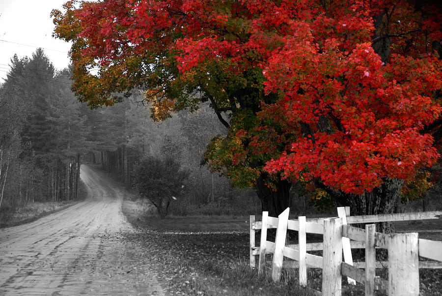 Vermont Photograph - Foliage And Black And White by Tammy Collins