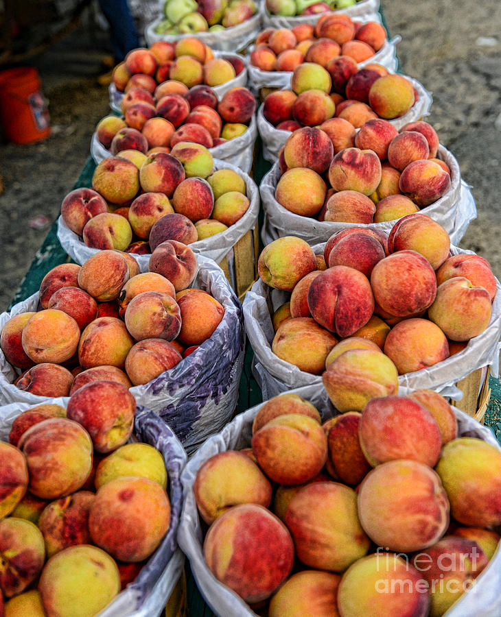 Food - Peaches In Baskets Photograph - Food - Harvested Peaches by Paul Ward