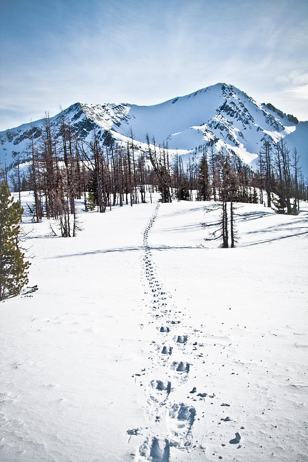 Vertical Photograph - Footprints Leads To Frosty Mountain by Christopher Kimmel