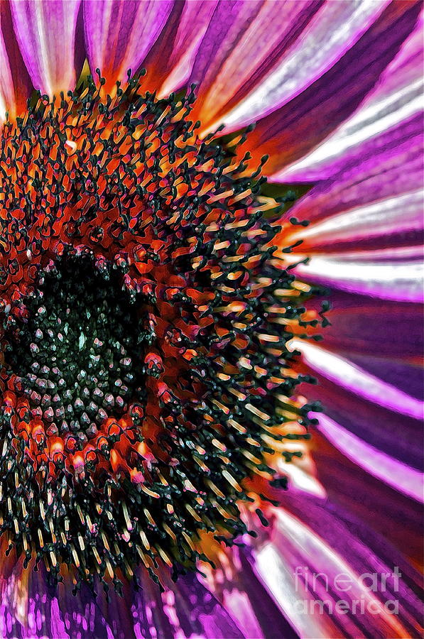 Sunflower Photograph - For Ana by Gwyn Newcombe
