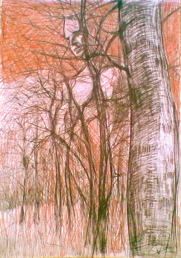 Forest 2 Drawing by Vaidos Mihai