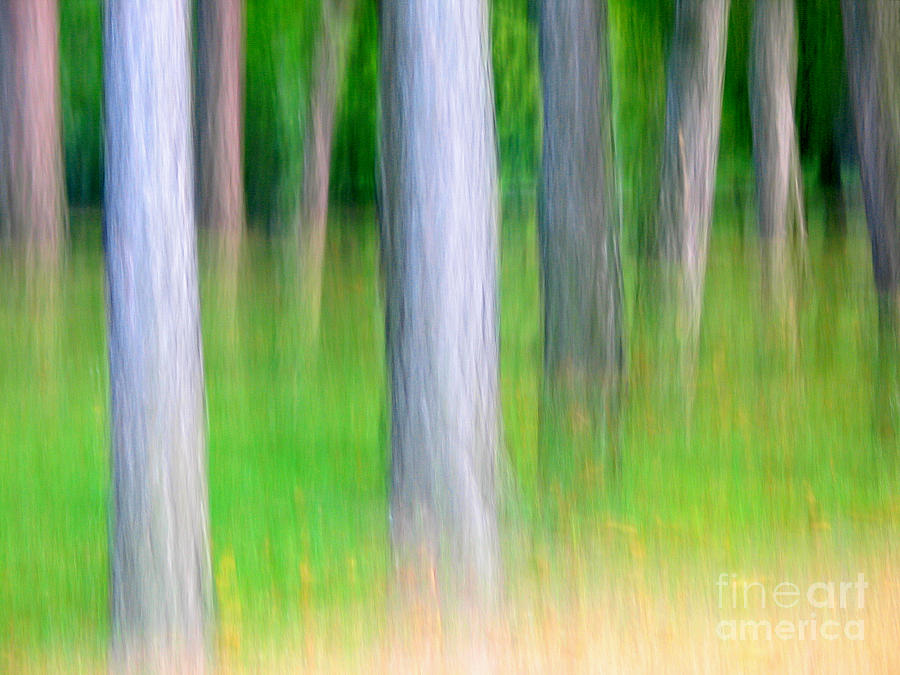 Nature Photograph - Forest Abstract by Odon Czintos