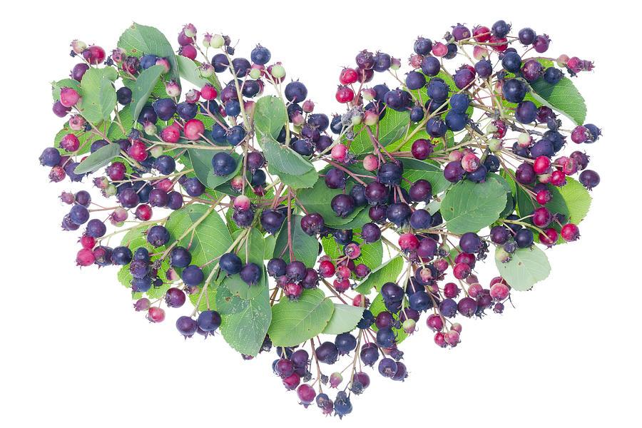 Heart Photograph - Forest Berries Heart by Aleksandr Volkov