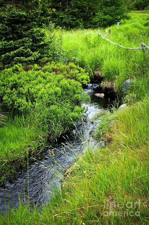 Creek Photograph - Forest Creek In Newfoundland by Elena Elisseeva