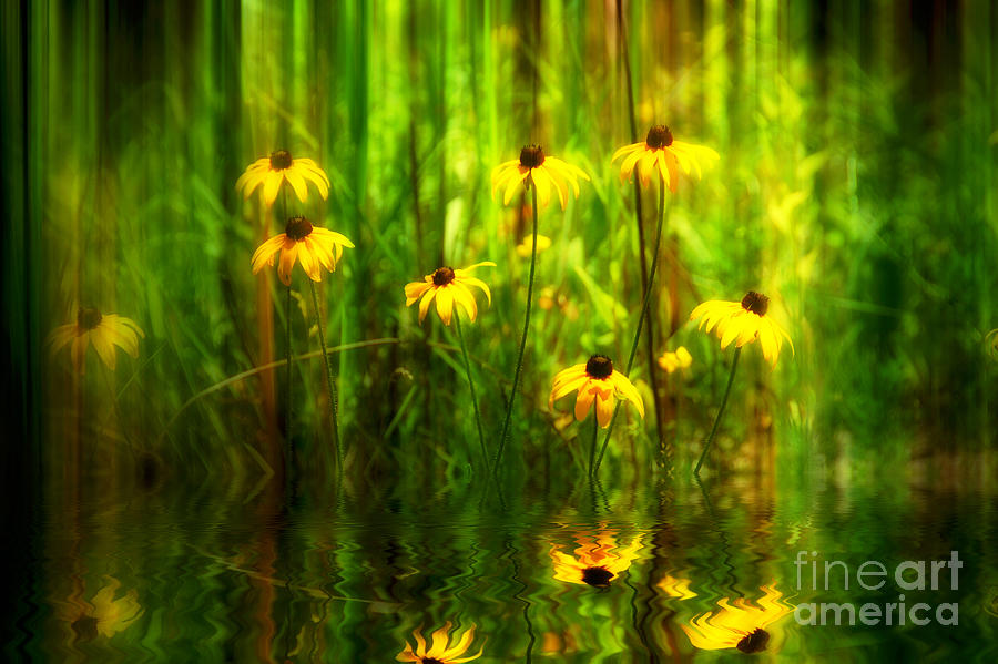Flower  Photograph - Forest Edge by Elaine Manley