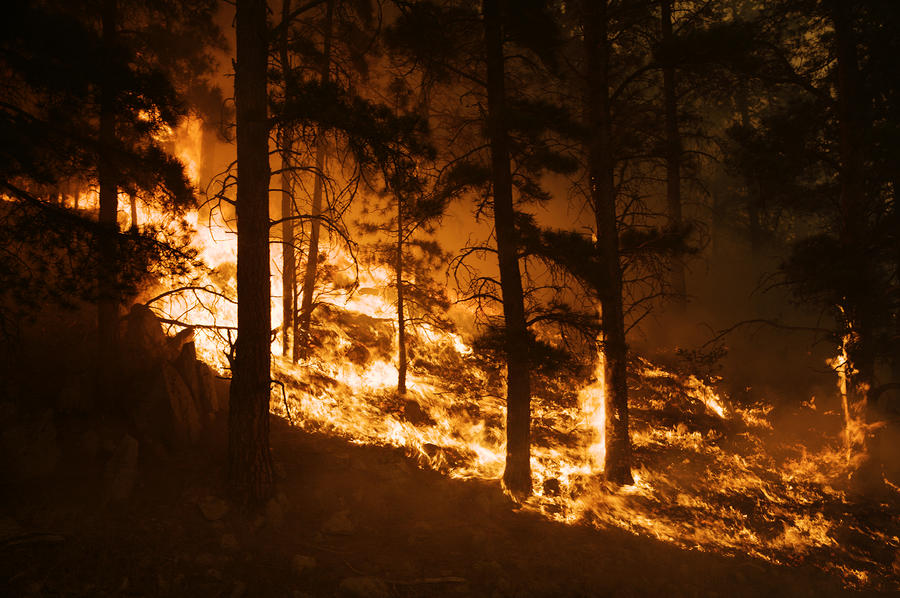 Forest Fire Caused By Lightning Photograph By Mark Thiessen