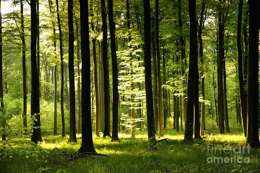 Hessen Photograph - Forest Idyll by Renate Knapp