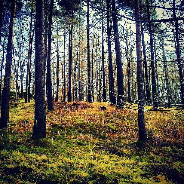 Pine Photograph - Forest in Cumbria by Nic Squirrell